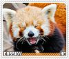 Cassidy-animalia