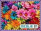 Nicolie-elements1