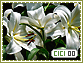 Cici-elements0
