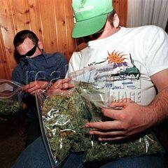 <b>Fiz:</b> Weed Dealer