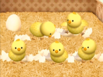 File:5 chicks.png