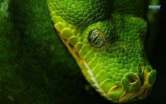 Snake-11223-1280x800