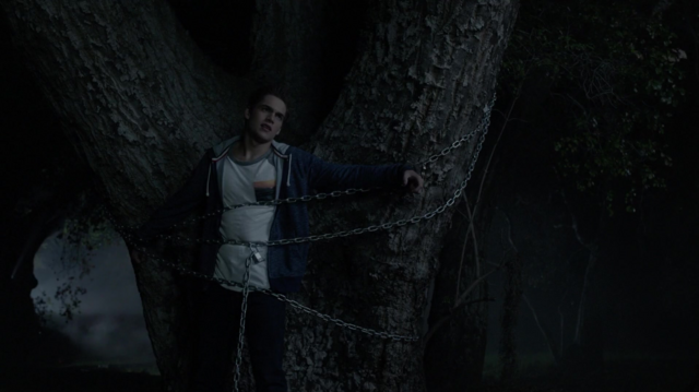 File:501LiamTree.png