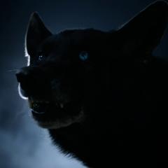 Derek as a wolf
