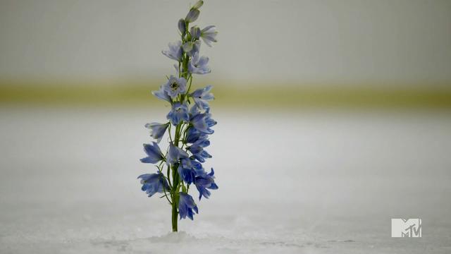 Archivo:Wolfsbane flower.png