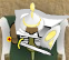 Ravinale Swordsman