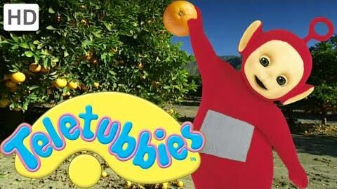 Teletubbies Orange Picking - HD Video