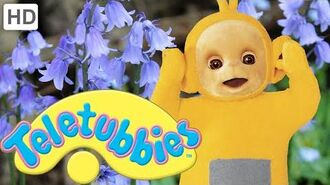 Teletubbies- Bluebells - HD Video