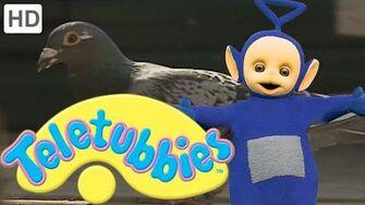 Teletubbies Grandad's Pigeons - HD Video