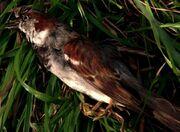 217-End-Bird