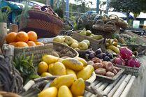 Terra Nova fruit and vegetables2
