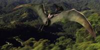 Unknown Pterosaur