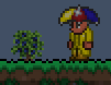 Blue Berries plant