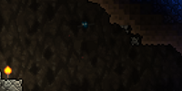 Cave Bat