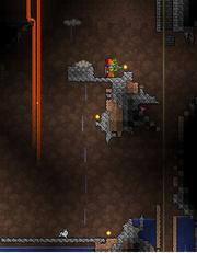 Nimbus rod bug