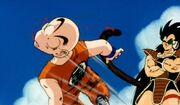 Krillin get owned!