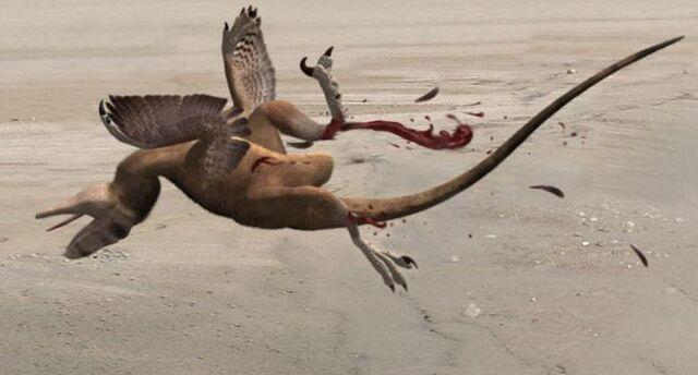 File:Dead raptor.jpeg