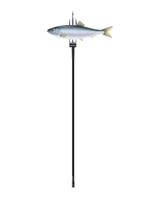 Fishing sounds like a good idea to me to
