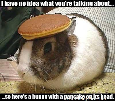 File:Tmp Funny-Cute-Rabbits-Funny-Cute-Rabbit-Picture-001-FunnyPica.com 674016855.jpg