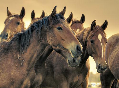File:Horse21.jpg