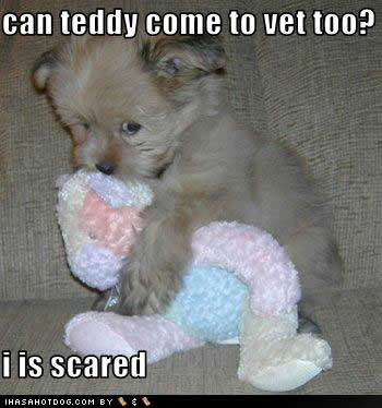 File:Cute-puppy-pictures-vet-scared1.jpg
