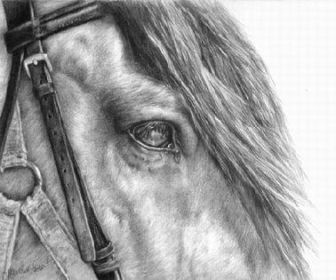 Horse close