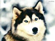 Jordy Wolf Form 2