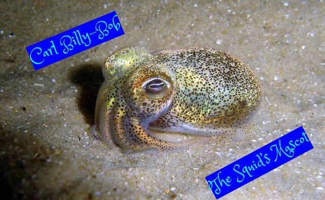 File:Carl Billy-Bob Squid.jpg