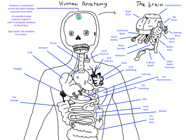 File:Other Anatomy.png