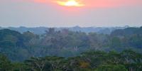 Internship Spotlight: Rainforest Partnership