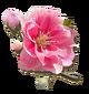 Spring Festival Sakura Blossoms