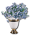 C009 Fragrant Flowers i05 Forgetmenots