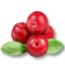 C228 Herbalists advice i06 Cranberries