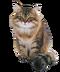 C172 Purebred cats i06 Siberian cat