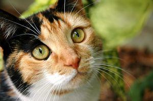 File:Cat 891.jpg