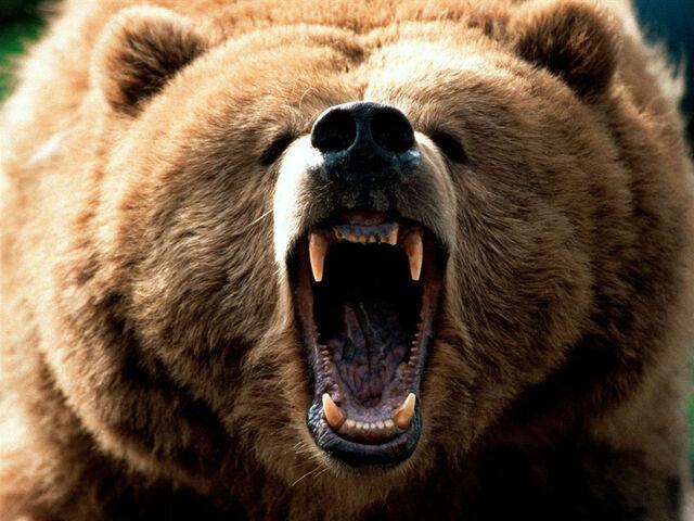 File:Eurasian Brown Bear.jpg