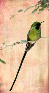 EmeraldHummingbird