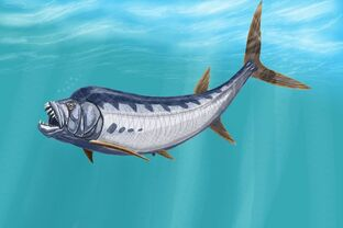 Goblinfish