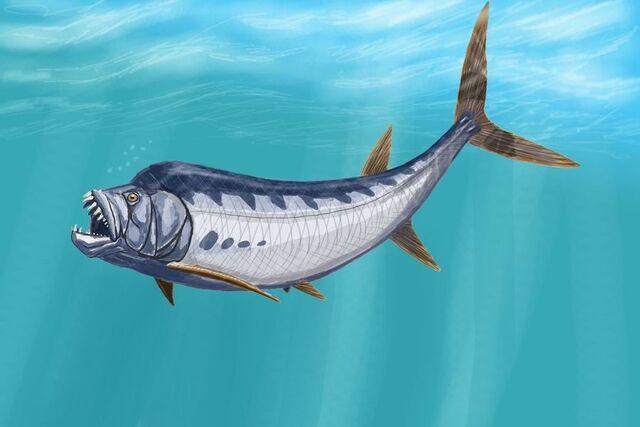 File:Goblinfish.jpg