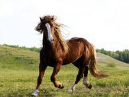 Brown-horse-1600x1200