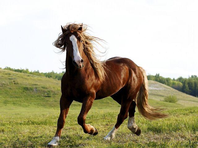 File:Brown-horse-1600x1200.jpg