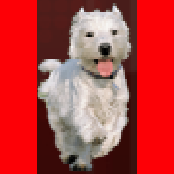File:Red Puppy.png