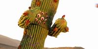 Night of the Cactus!
