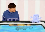 Platypus swimming in the tub