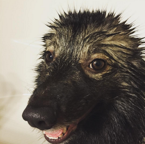 File:Mishka When bath is life.PNG