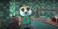 Meerkat Dude