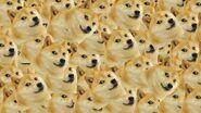Doge many