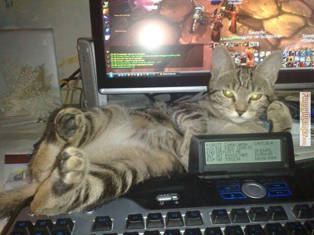 File:Cat-memes-hello-ladies.jpg