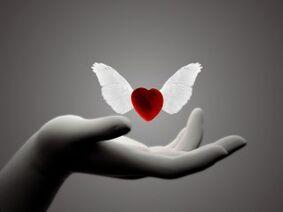 Wings-heart