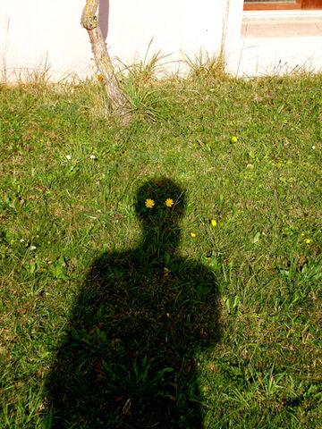 File:I Am Shadow Man (Dandelion).jpg